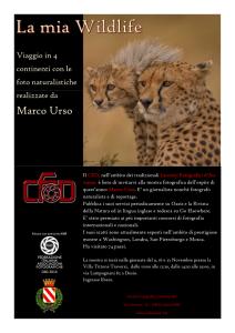 Desio - Urso_Page_1