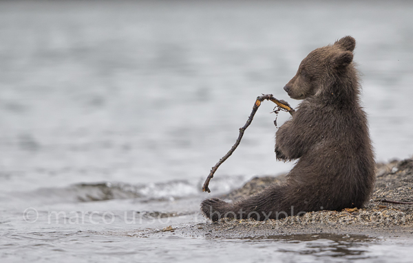 Urso Marco Riproduzione vietata-153